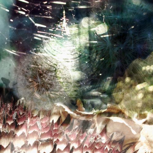 2015_reseau_arachneen